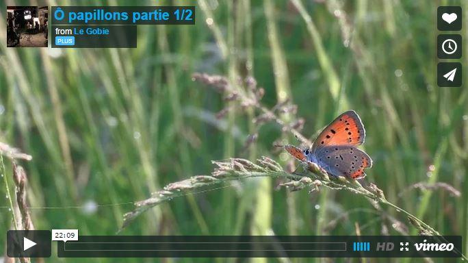 Ô papillons - Partie 1 - Vignette