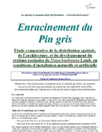 Enracinement du Pin gris - Vignette