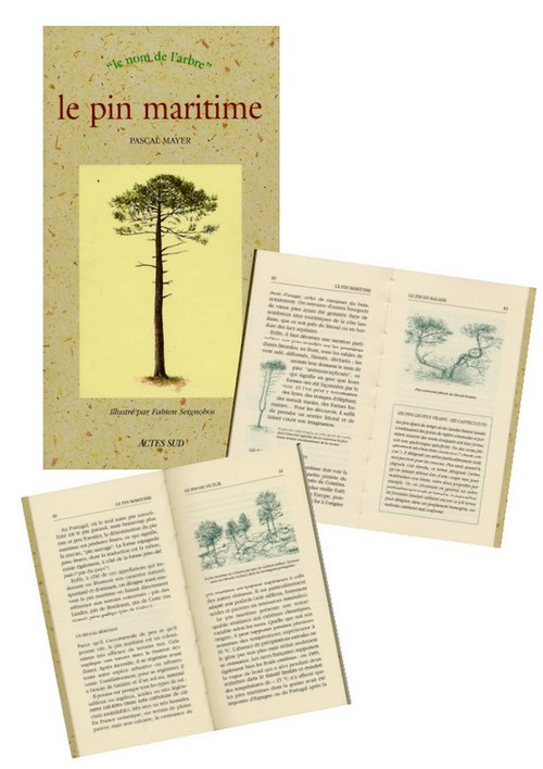 Le pin maritime (Pascal Mayer)