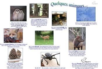Quelques animaux - Vignette