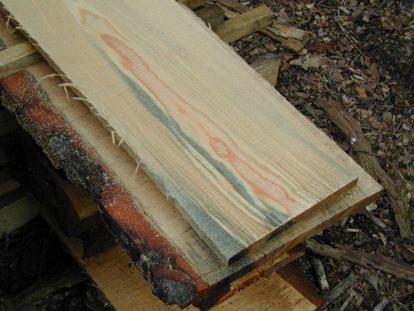 Le pin, le bois, le bleu, et nous - n100094 - Vignette