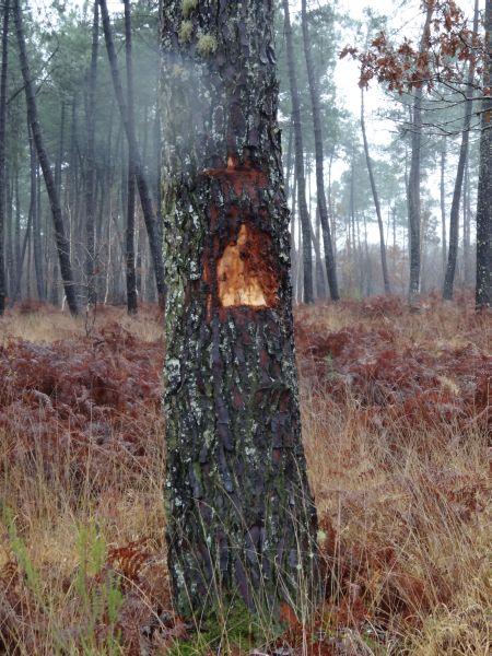 Dégradations en forêt - s101882 - Vignette