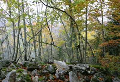 La forêt dans Le Monde - c106448 - Vignette