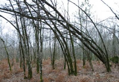 Vents et forêts - c106822 - Vignette