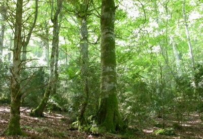 n404730 - Forêt-Mail - une mine d'informations - Vignette