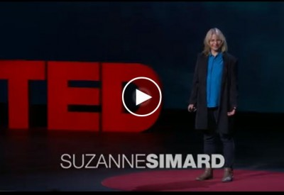 suzanne-simard-how-trees-talk-to-each-other-vignette