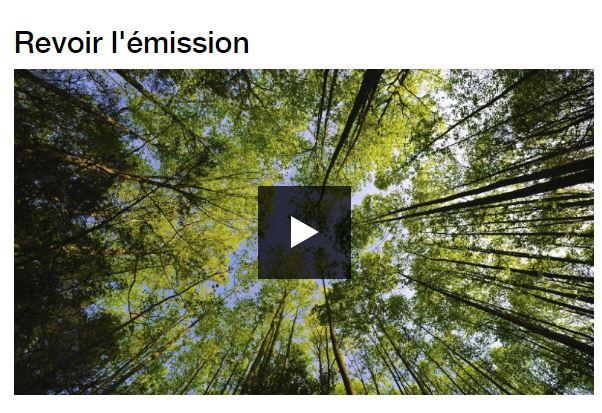 Mal-hêtre - Enquête sur la forêt française - Vignette 2