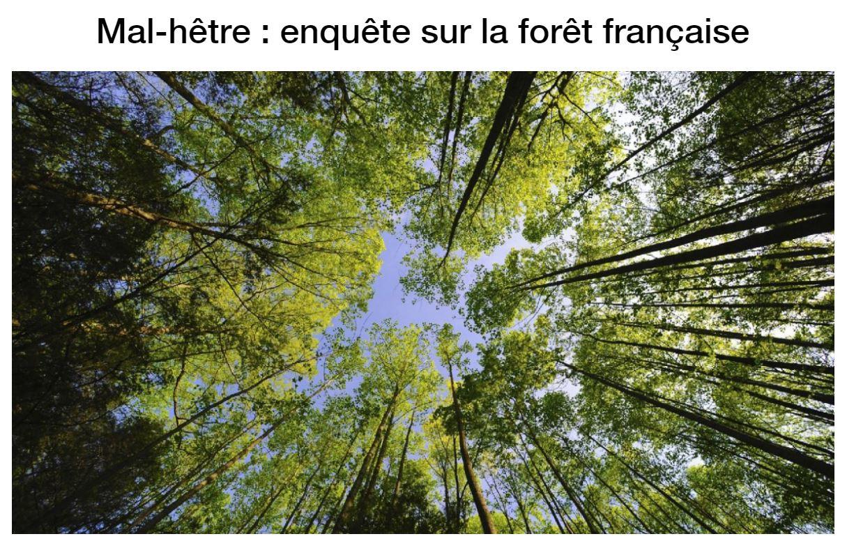 Mal-hêtre - Enquête sur la forêt française - Vignette