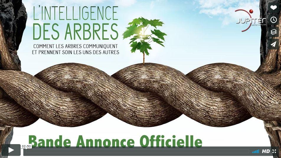 L'intelligence des arbres - Bande-annonce - Vignette