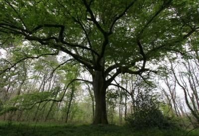 Stockage du carbone et âge des arbres - c302939 - Vignette