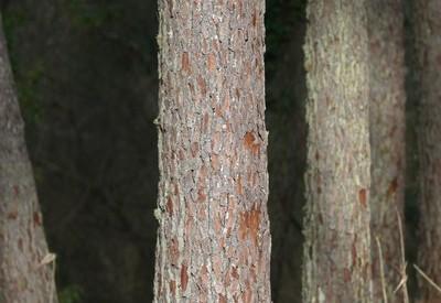 La qualité des bois - Vignette