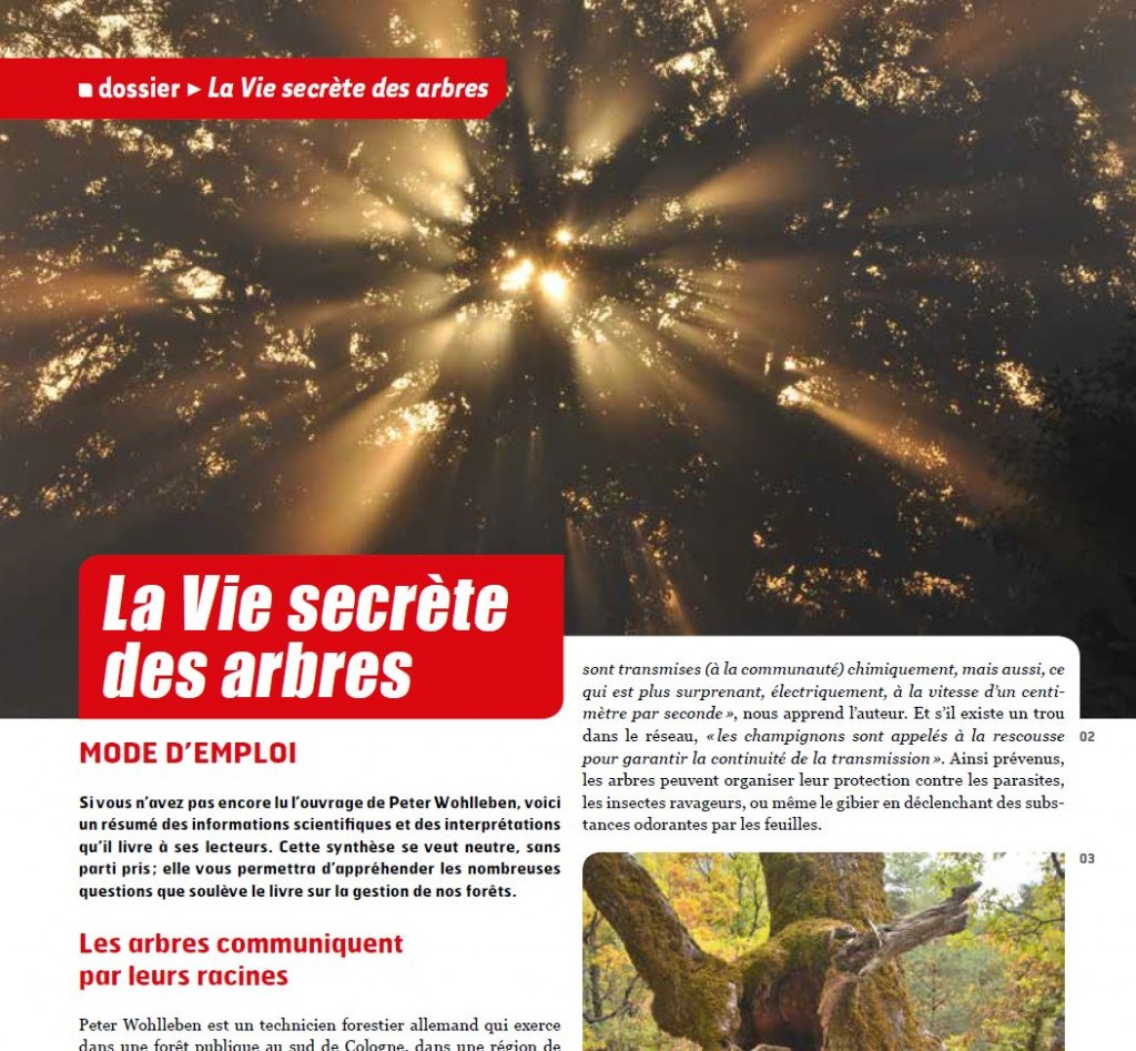 Forêts de France - La vie secrète des arbres - Vignette