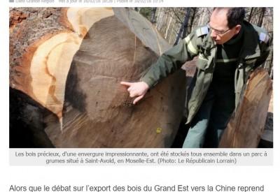 Vente de chêne en Moselle - Vignette
